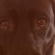 fanny der schulhund